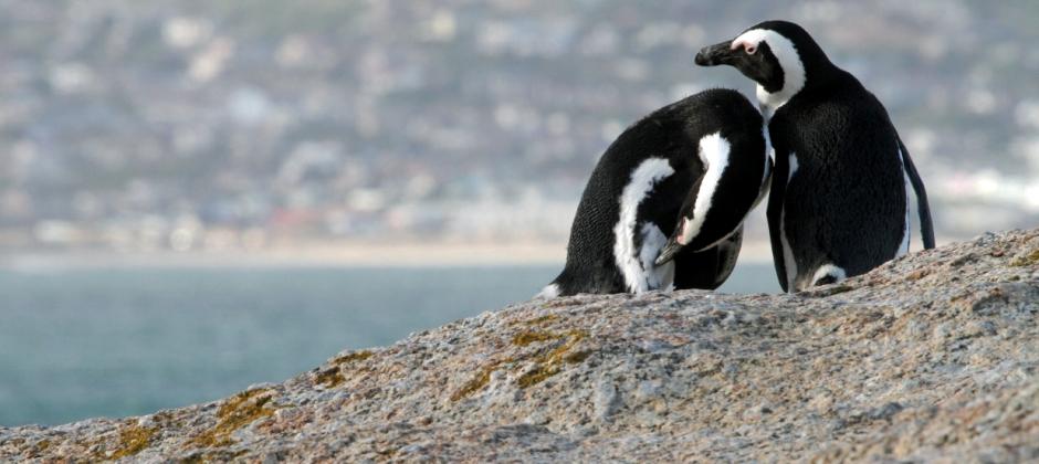 Cape Town : Cape Point Tour