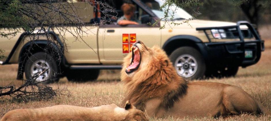 Sun City- Pilanesberg Game Drive