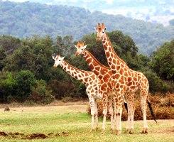 Discover Kenya