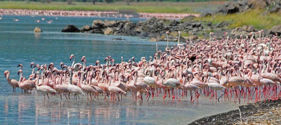 Aberdare- Lake Naivasha