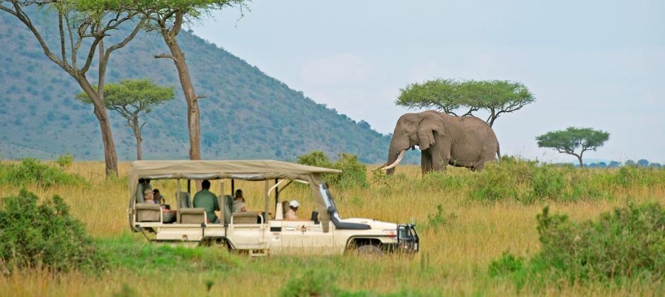 Masai Mara- Nairobi-Departure