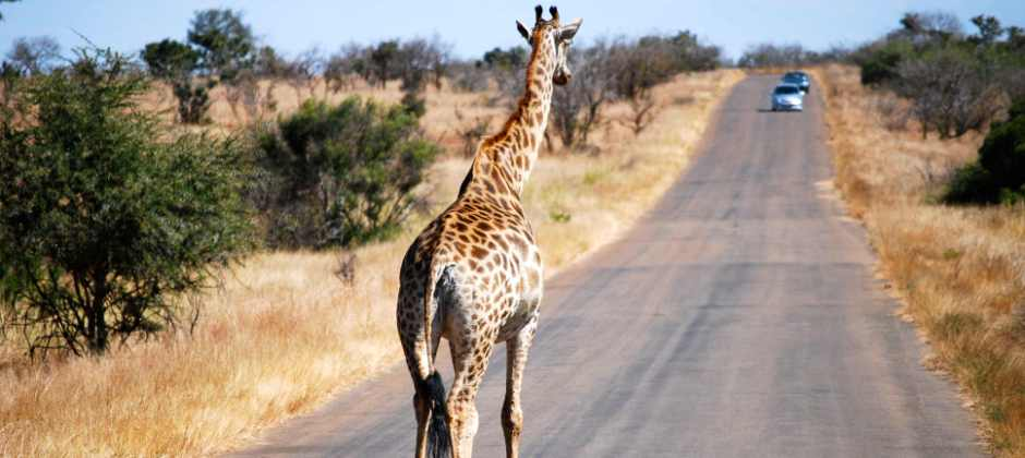 Arrive Johannesburg- Kruger, Mpumalanga
