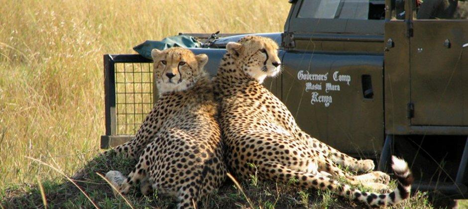 Masai Mara Game Reserve (Governors' Camp)