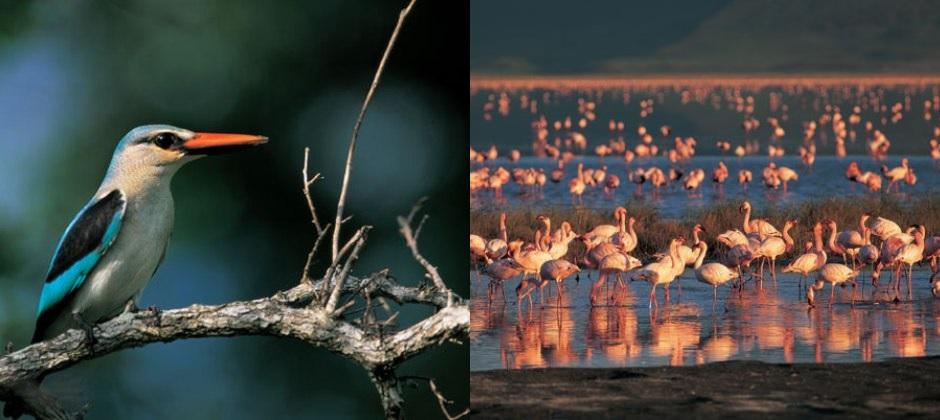 Serengeti: Game Drive
