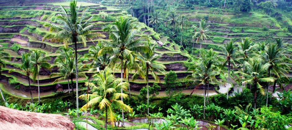 Ubud: Day Free At Leisure