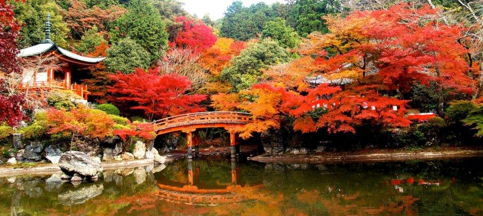 Kyoto | Full day Kyoto City Tour