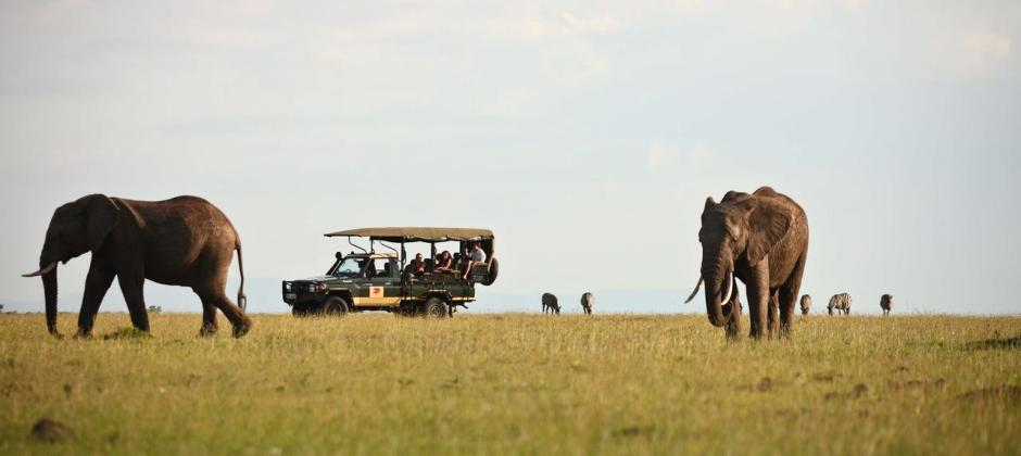 Masai Mara National Reserve: Game Drive