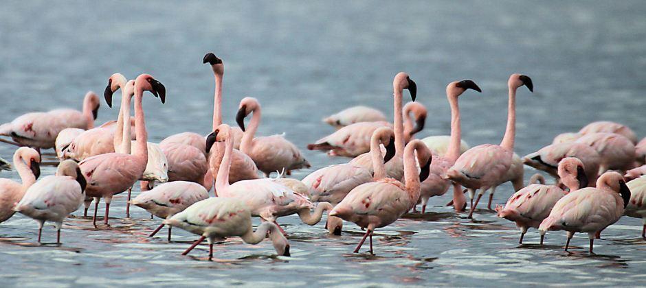 Sweetwaters-Lake Nakuru National Park