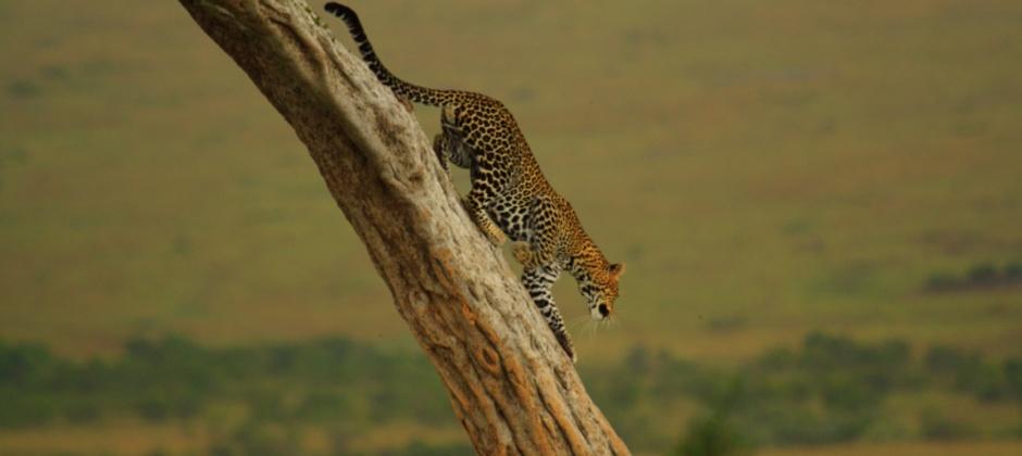 Lake Nakuru National Park- Masai Mara