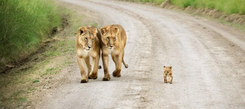 Masai Mara: Game drive