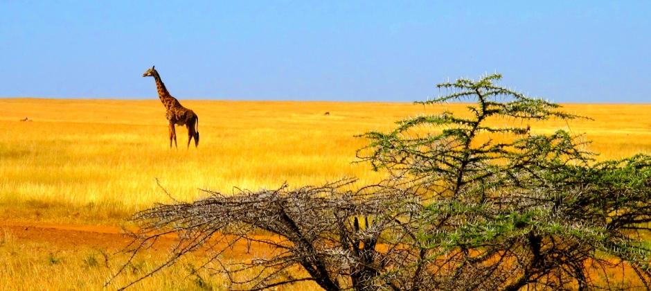 Masai Mara – Nairobi – Depart