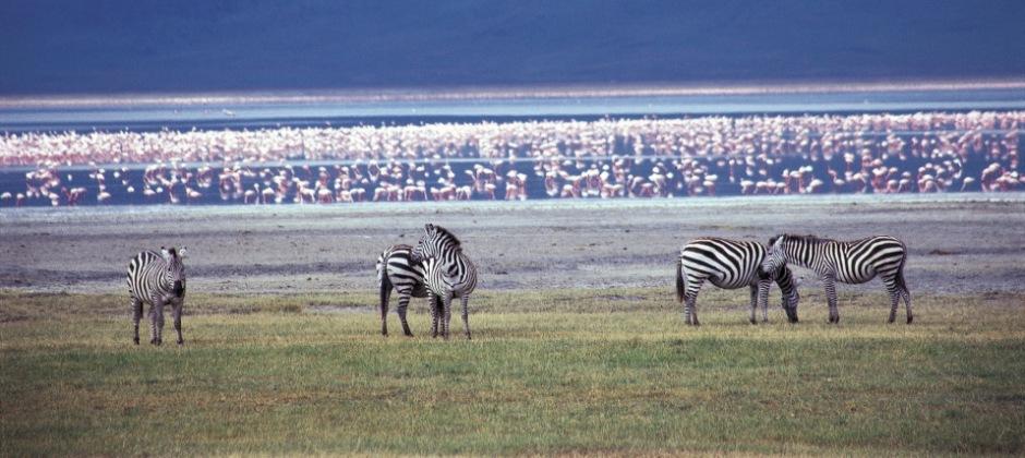 Arrive Tanzania - Lake Manyara
