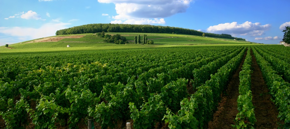 Lyon: Beaujolais vineyard visit