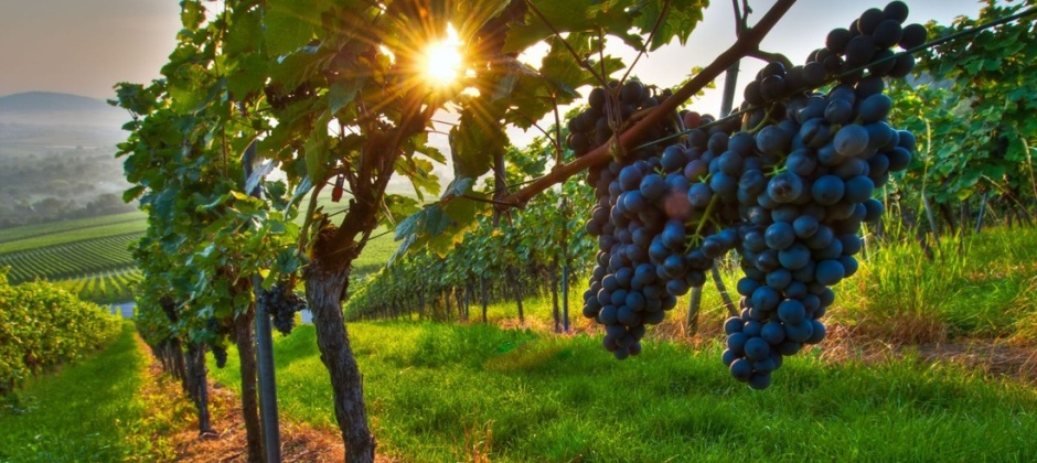 Cape Town – Wine land: Experience Wine Tasting