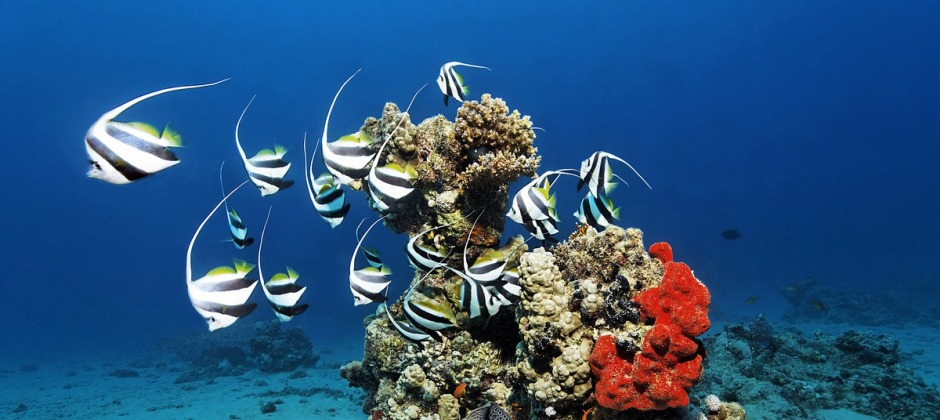 Hurghada: Full Day Trip to Snorkeling Trip At Giftun Island