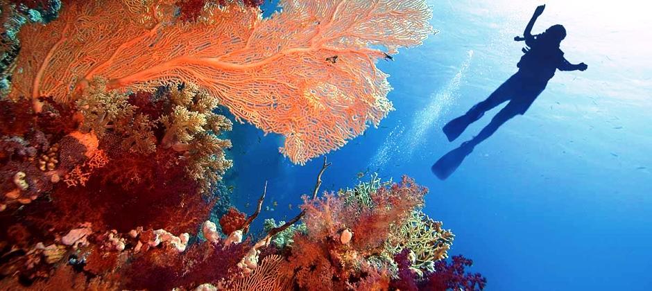 Sharm El Sheikh: Full Day Ras Mohamed Tour