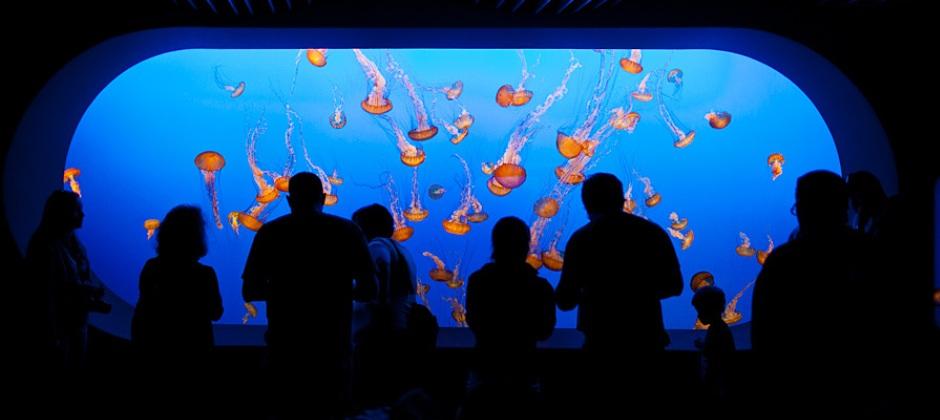 Arrive Pebble Beach | Monterey Bay Aquarium family pass