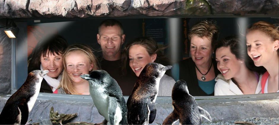 Arrive Christchurch: Antarctic Center tickets