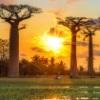 Authentic Madagascar