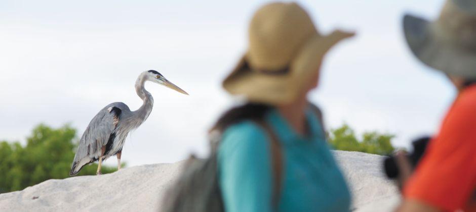 Arrive Elizabeth Bay, Galapagos (07:00 Hrs) - Caleta Tagus, Isabela (15:00 Hrs)