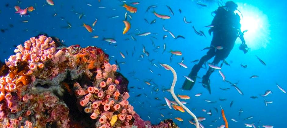Guraidhoo, South Male – Maafushi Island | Explore the coral in Maafushi Island