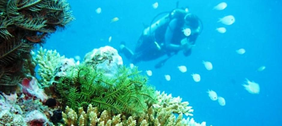 Maafushi Island | Free and Easy