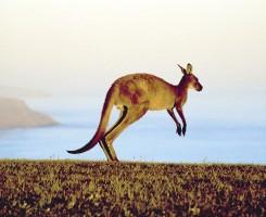 Australia's Funtastic Four