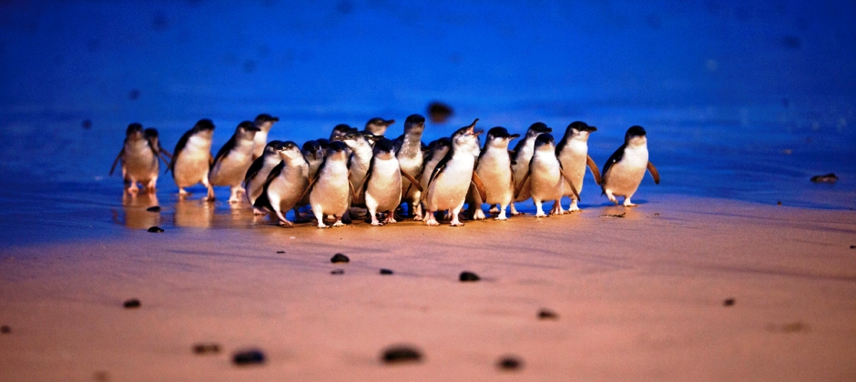 Melbourne: Half Day City Tour And Phillip Island Penguins & Farm Tour
