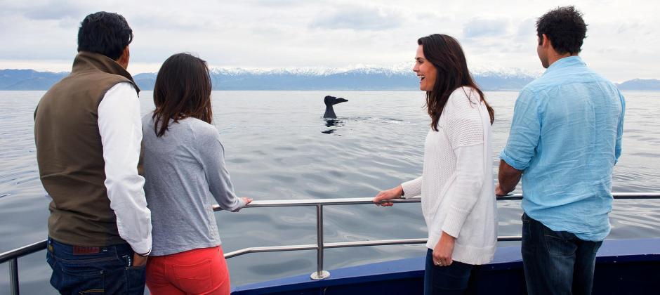 Christcurch – Kaikoura - Whale Watching Cruise