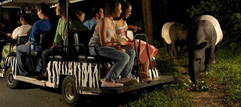 Jurong Bird Park & Night Safari