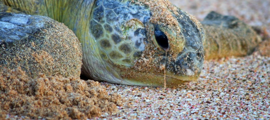 Muscat- Ras Al Hadd: Turtle Watching (Ras Al Jinz)